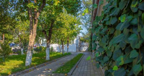 . Natsvlishvili Apartment