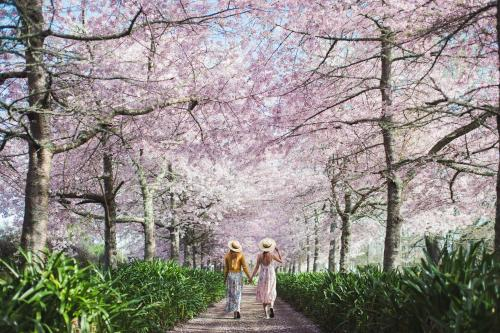 English Cherry Tree manor - Accommodation - Tamahere
