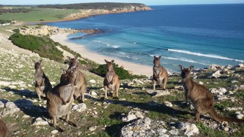 . Waves & Wildlife Cottages Kangaroo Island