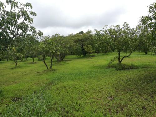 Vinyasa Treeland Saphale, Palghar