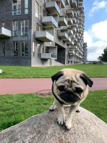 Cute Pug Guesthouse, Pension in Kopenhagen
