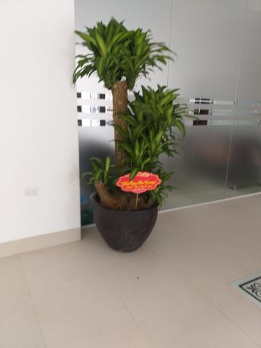 Hoang gia hotel, Hoàng Mai