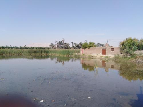 West Side of luxor, Unorganized in Qina