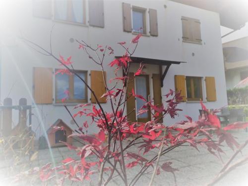 la STELLA House - Apartment - Tarvisio