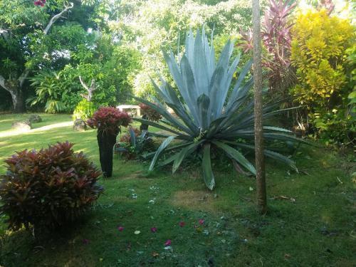 Villa Los Palmares Guest House & Eventos, San Cristóbal