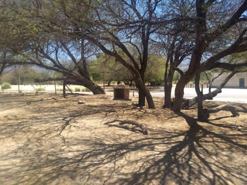 . Camping agreste El Algarrobo de Quilmes