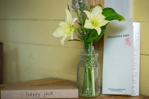 Happy Jack - Lunenburg, NS B0R 1E0