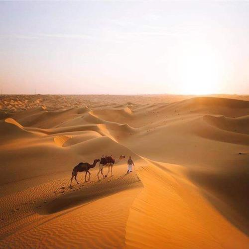 Enjoy Desert, Biddiya