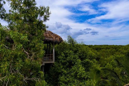 Mermaid Cabana and Tree Houses