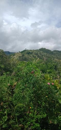 Palm Bungalow, Ende