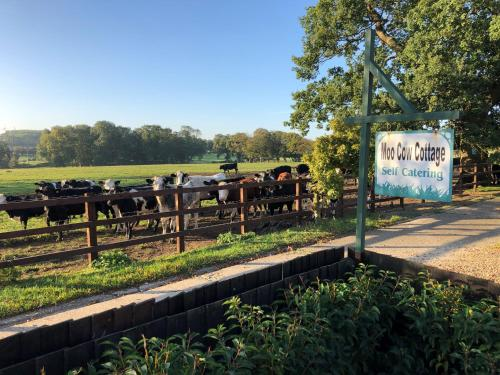 Moo Cow Cottage Self Catering, , Rutland