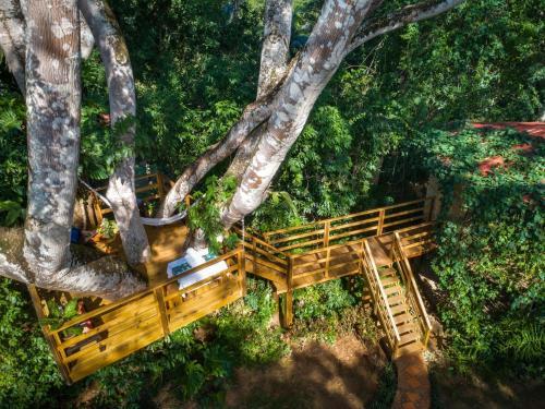 . Sweet Songs Jungle Lodge