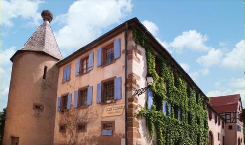 Au Nid de Cigogne - Apartment - Zellenberg