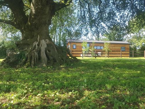 Beech Tree Lodge, Boyton, Cornwall