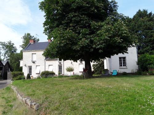 Chambres d'Hôtes de l'Ile du Saule - Chambre d'hôtes - Saumur