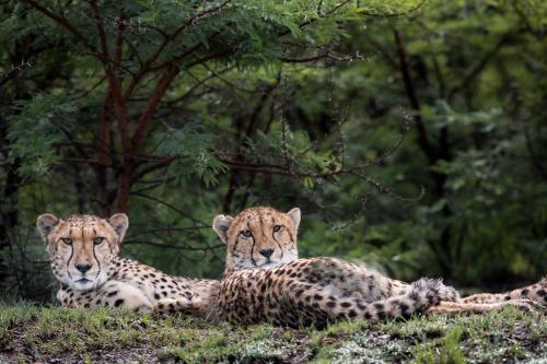 . Cheetah Ridge Lodge