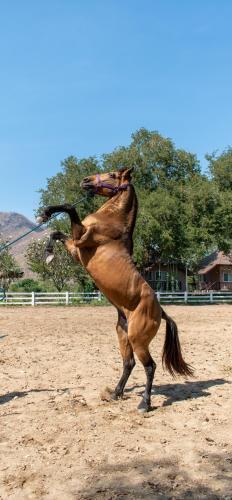 Chaowanat Horse Farm Resort Chaowanat Horse Farm Resort