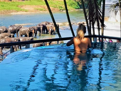 ". Hotel Elephant Park ""Grand Royal Pinnalanda"""