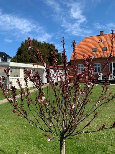 H. C. Lumbyes Vej - kælderlejlighed, Pension in Odense bei Odense