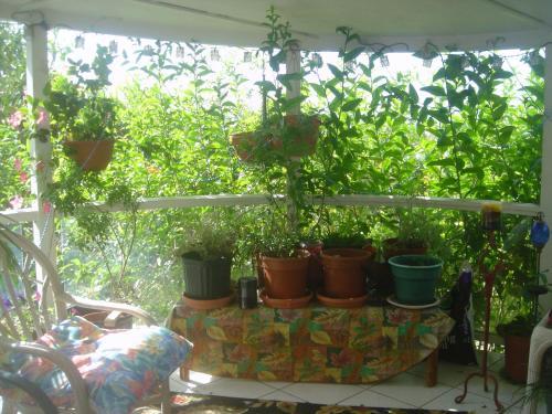 Green Lions Farm B&b - Holualoa, HI 96725