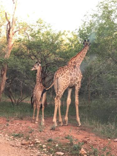 Migrate Bush Chalets, Marloth Park, Mpumalanga