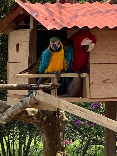 Jungle Lodge El Jardin Aleman, Tena