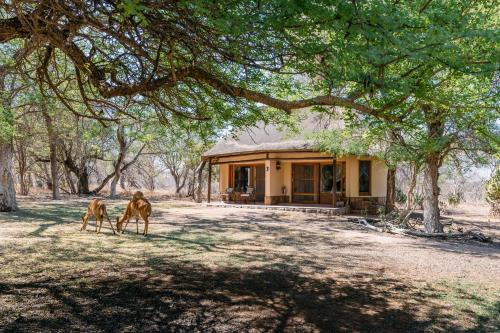 Thornybush N'Kaya Lodge