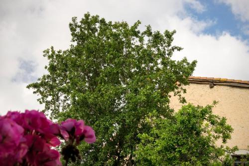 Habitación Individual Posada El Prado Mayor 3