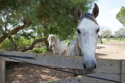 . Gîtes Equestres Les Cabanes de Cambon - Saintes Maries de la Mer