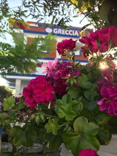 . Greccia Hotel