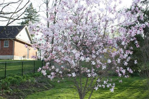Carrousel Bed&Breakfast - Accommodation - Cayuga