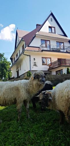 Accommodation in Zakopane