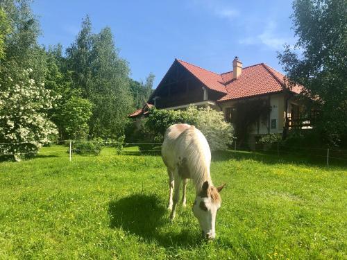 Modryna Ranczo - Hotel - Krasiczyn