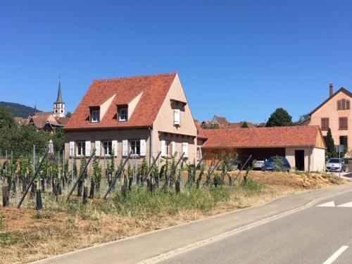 La Clé du Vignoble - Accommodation - Mittelbergheim