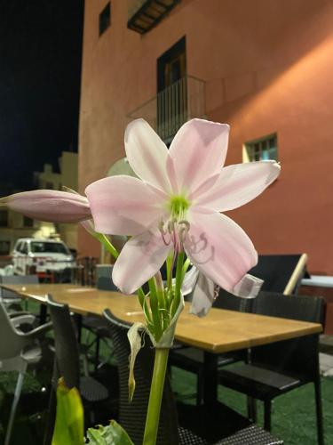 . Restaurant & Rooms Cabrit