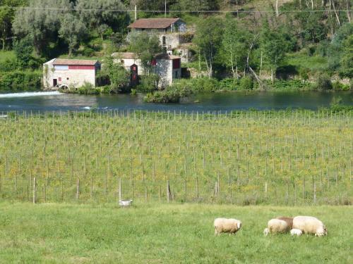 Quinta Do Burgo - Turismo Rural - Photo 5 of 85