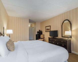 Room #2996506