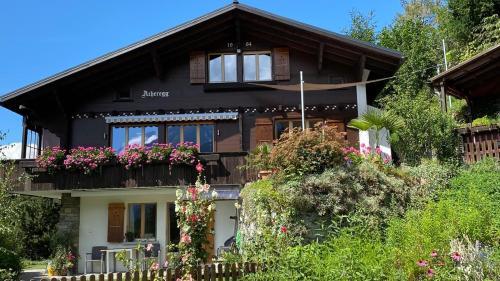 Chalet Acheregg - Apartment - Wengen