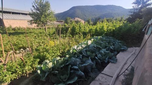 Eco Guest House In Meghradzor