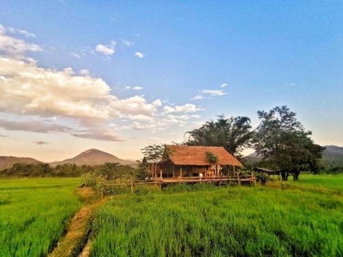 Wanmai Farm Stay Muangkong วันใหม่ฟาร์มสเตย์ เมืองคอง เชียงดาว Chiang Dao