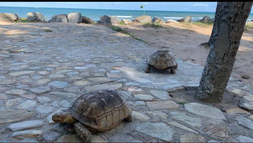 The C Beach -Sea Turtle Hatchery & Animal Sanctuary