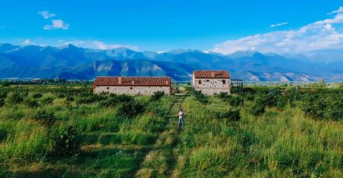 Mestvireni - Accommodation - Telavi