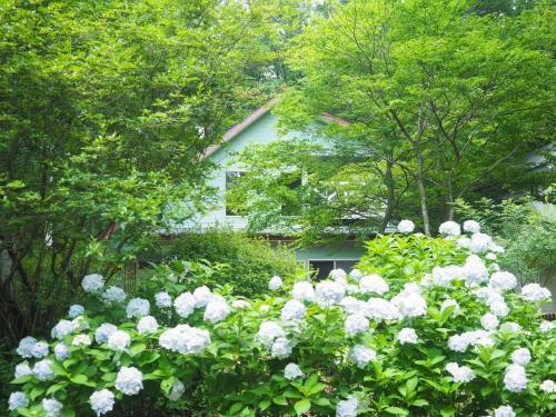 Nasu-gun - House - Vacation STAY 9262