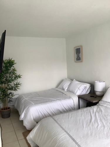 Hotel Motel Lauderdale Inn - image 8