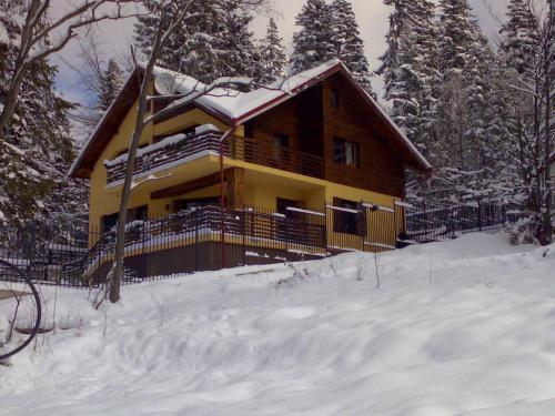 Vila Piscul Ursului - Accommodation - Predeal
