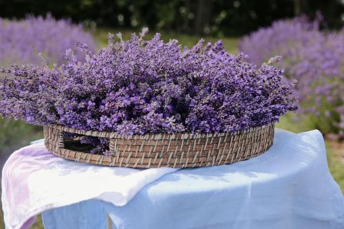 Lavender Village - Photo 4 of 96