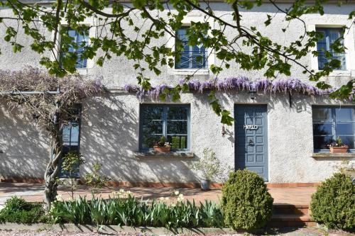 Le Tilleul de Ray - Accommodation - Ray-sur-Saône