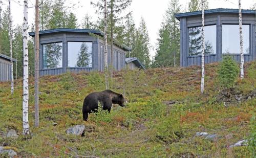 Luxury Bear Cabin Ltd