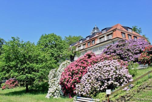 Ferienwohnung Natur und Kunst - Hotel - Dresden