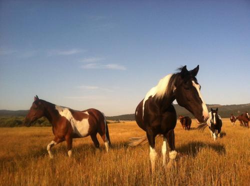 Bar N Ranch - West Yellowstone, MT 59758